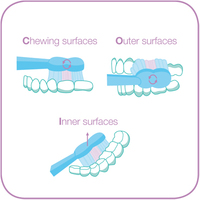 Graphic showing the correct technique for cleaning teeth